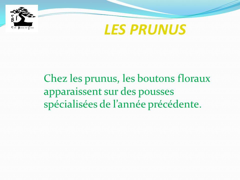 LES PRUNUS Les bourgeons : Bourgeon apical ou terminal : bourgeon à lextrémité dune pousse.