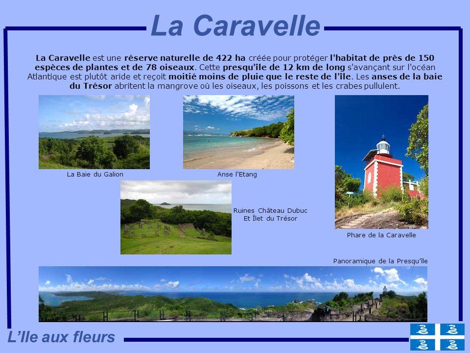 La Caravelle est une réserve naturelle de 422 ha créée pour protéger l'habitat de près de 150 espèces de plantes et de 78 oiseaux. Cette presqu'île de