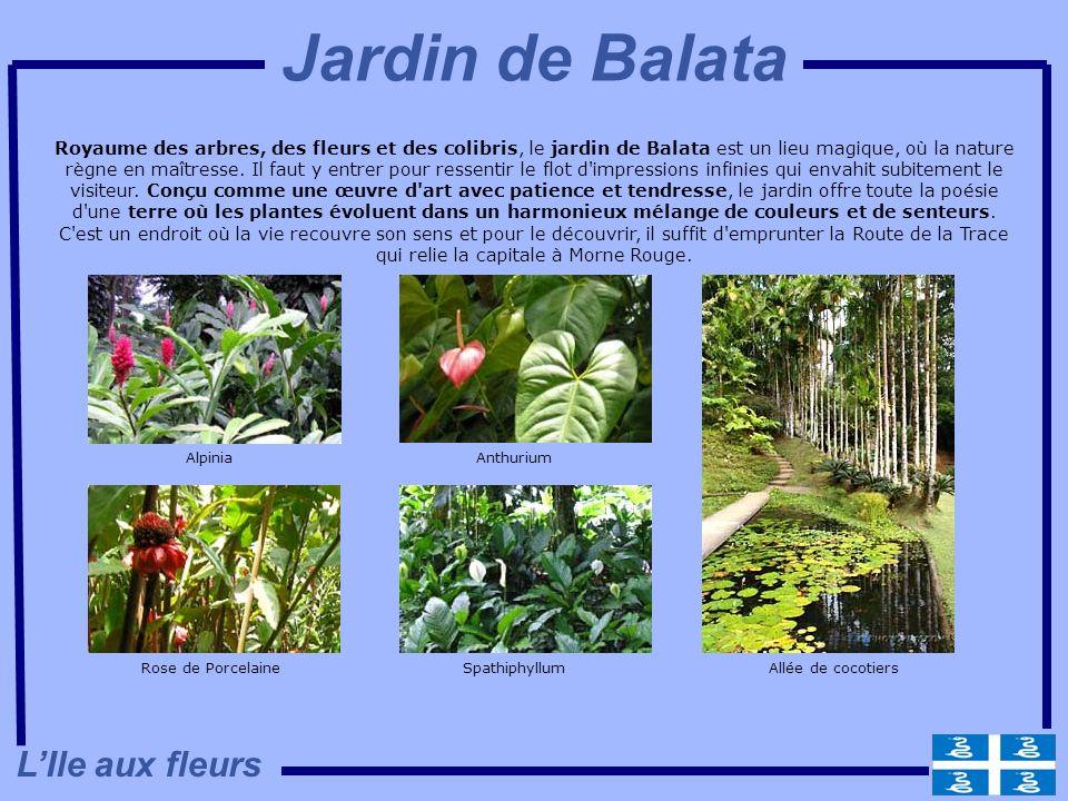 Royaume des arbres, des fleurs et des colibris, le jardin de Balata est un lieu magique, où la nature règne en maîtresse. Il faut y entrer pour ressen