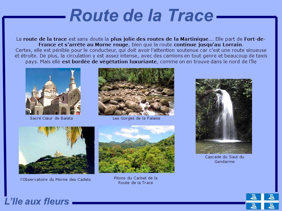 La route de la trace est sans doute la plus jolie des routes de la Martinique... Elle part de Fort-de- France et s'arrête au Morne rouge, bien que la