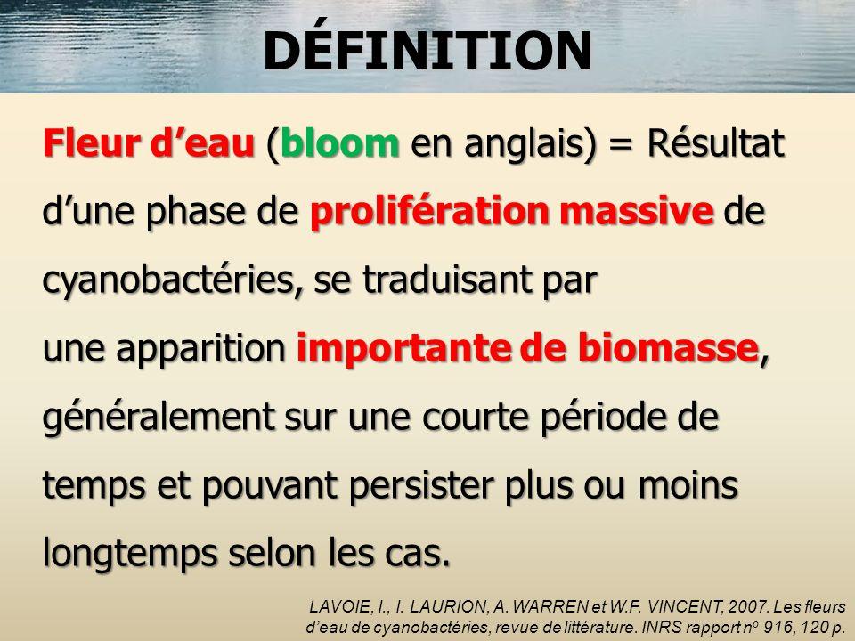 Fleur deau (bloom en anglais) = Résultat dune phase de prolifération massive de cyanobactéries, se traduisant par une apparition importante de biomass