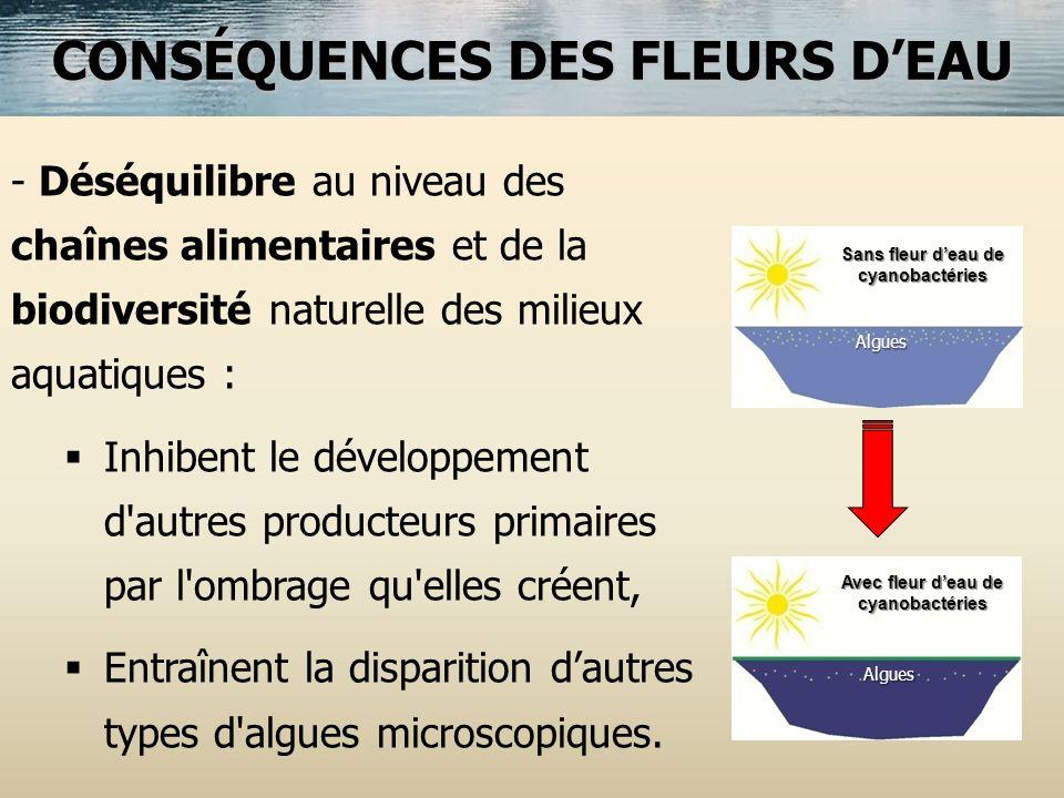 CONSÉQUENCES DES FLEURS DEAU - Déséquilibre au niveau des chaînes alimentaires et de la biodiversité naturelle des milieux aquatiques : Inhibent le dé