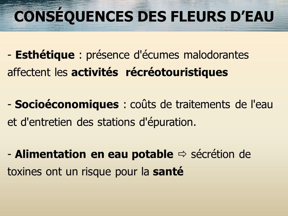 CONSÉQUENCES DES FLEURS DEAU - - Esthétique : présence d'écumes malodorantes affectent les activités récréotouristiques - - Socioéconomiques : coûts d