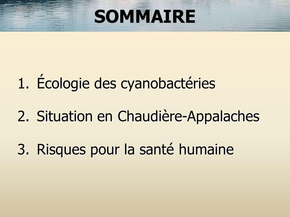 1.Écologie des cyanobactéries 2.Situation en Chaudière-Appalaches 3.Risques pour la santé humaine SOMMAIRE