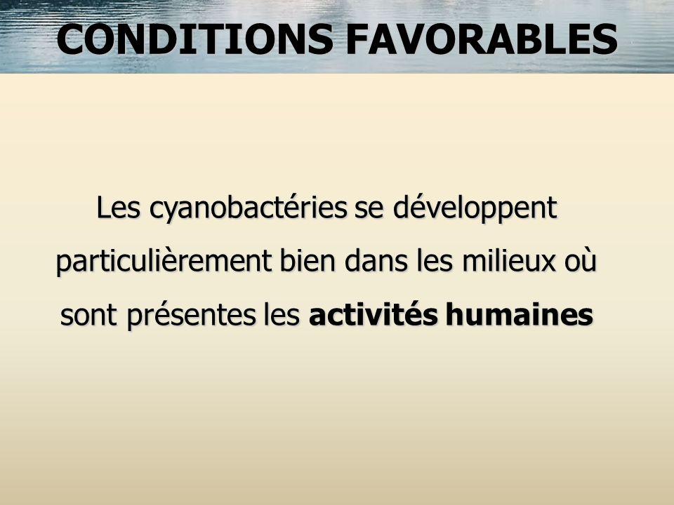 Les cyanobactéries se développent particulièrement bien dans les milieux où sont présentes les activités humaines CONDITIONS FAVORABLES