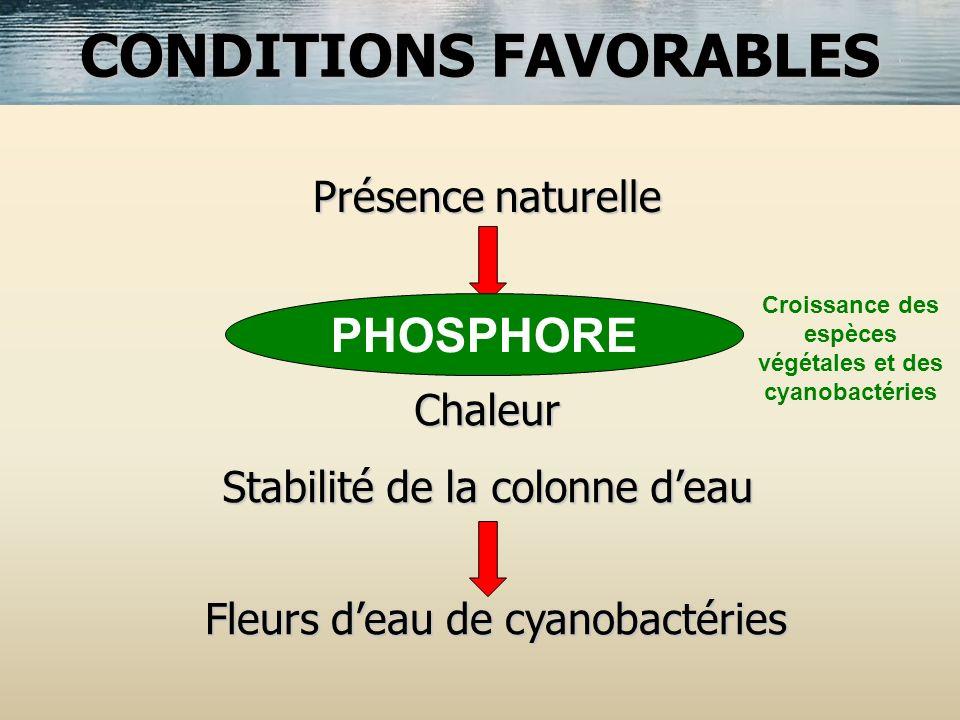 Présence naturelle Nutriments minéraux Chaleur Stabilité de la colonne deau Fleurs deau de cyanobactéries CONDITIONS FAVORABLES PHOSPHORE Croissance d