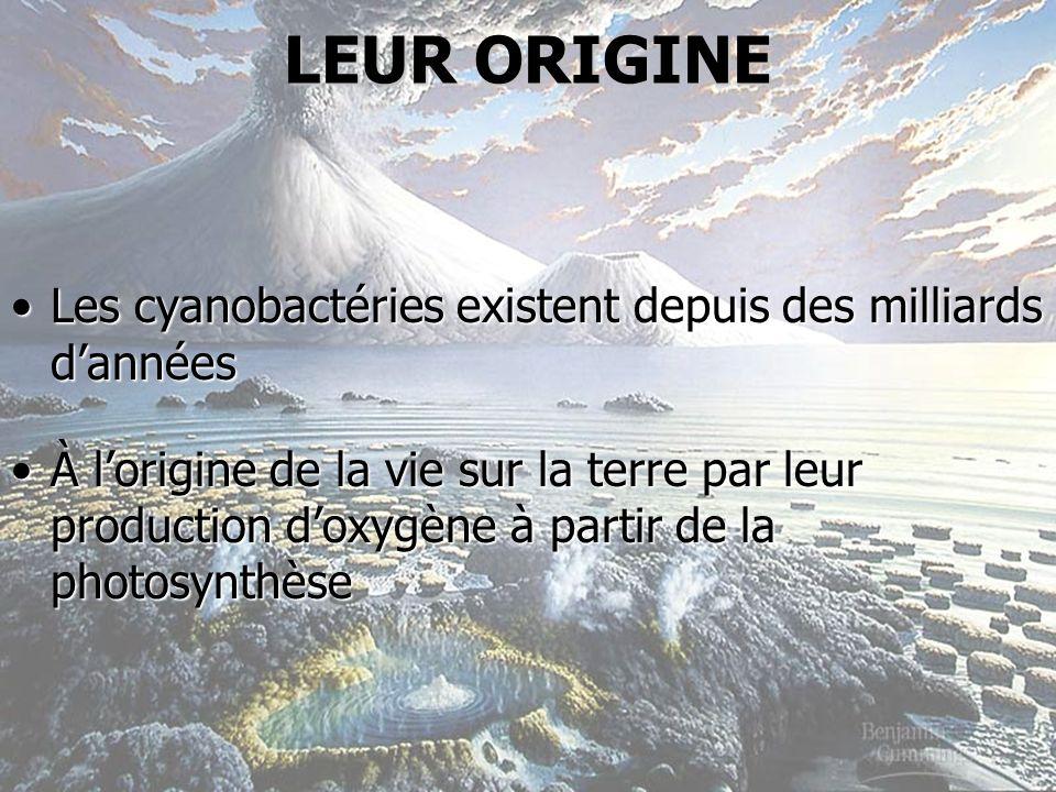 Les cyanobactéries existent depuis des milliards dannéesLes cyanobactéries existent depuis des milliards dannées À lorigine de la vie sur la terre par