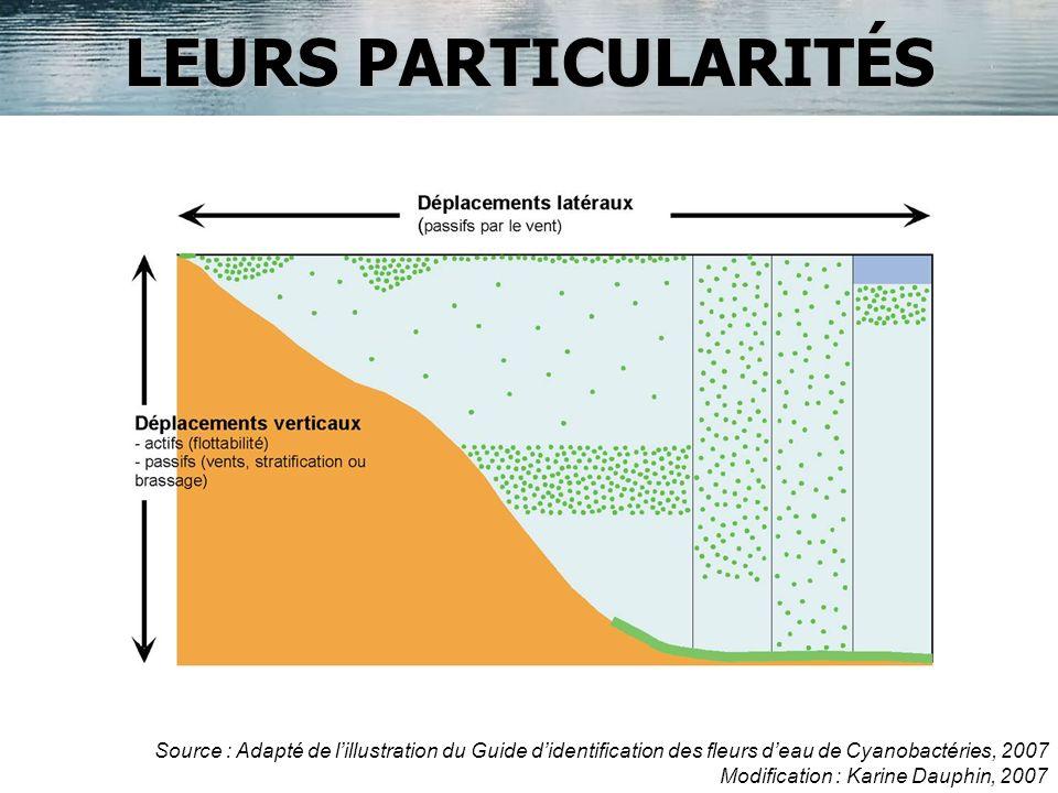 LEURS PARTICULARITÉS Source : Adapté de lillustration du Guide didentification des fleurs deau de Cyanobactéries, 2007 Modification : Karine Dauphin,