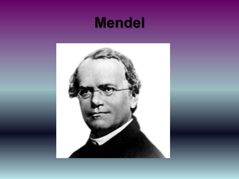 Tiré de Wikipédia Johann Gregor Mendel (20 juillet 1822 - 6 janvier 1884), moinedans le monastère de Brno (en Moravie) 1 et botanistegerman ophone autrichien, est communément reconnu comme le père fondateur de la génétique.