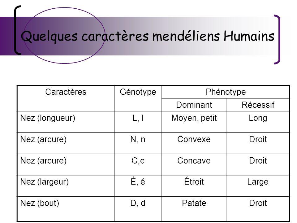 Quelques caractères mendéliens Humains CaractèresGénotypePhénotype DominantRécessif Nez (longueur)L, lMoyen, petitLong Nez (arcure)N, nConvexeDroit Ne