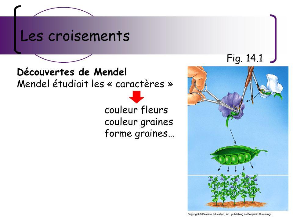Les croisements Découvertes de Mendel Mendel étudiait les « caractères » Fig. 14.1 couleur fleurs couleur graines forme graines…
