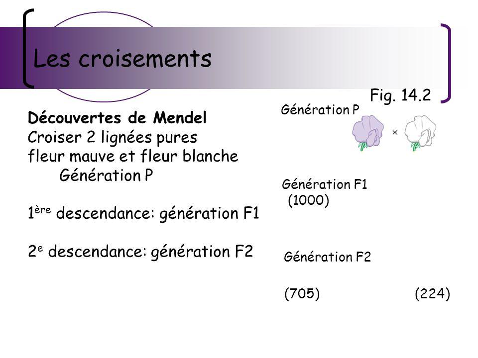 Les croisements Découvertes de Mendel Croiser 2 lignées pures fleur mauve et fleur blanche Génération P 1 ère descendance: génération F1 2 e descendan