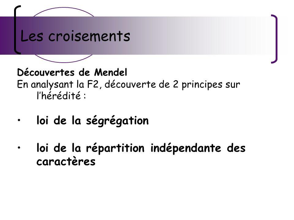 Les croisements Découvertes de Mendel En analysant la F2, découverte de 2 principes sur lhérédité : loi de la ségrégation loi de la répartition indépe