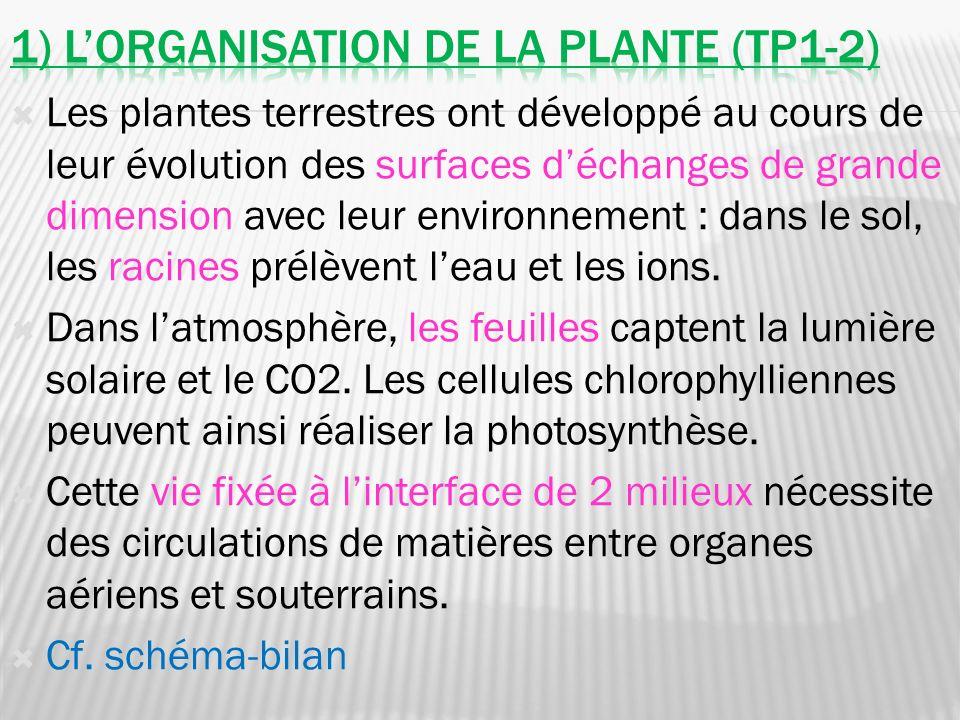 Les plantes terrestres ont développé au cours de leur évolution des surfaces déchanges de grande dimension avec leur environnement : dans le sol, les