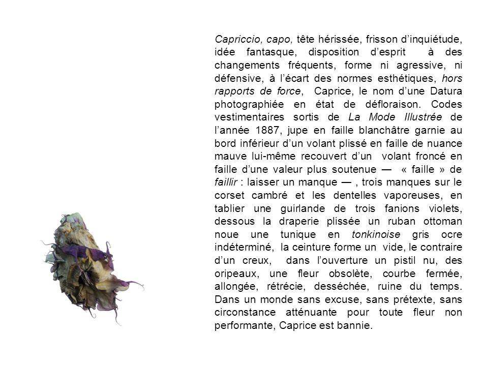 Capriccio, capo, tête hérissée, frisson dinquiétude, idée fantasque, disposition desprit à des changements fréquents, forme ni agressive, ni défensive, à lécart des normes esthétiques, hors rapports de force, Caprice, le nom dune Datura photographiée en état de défloraison.
