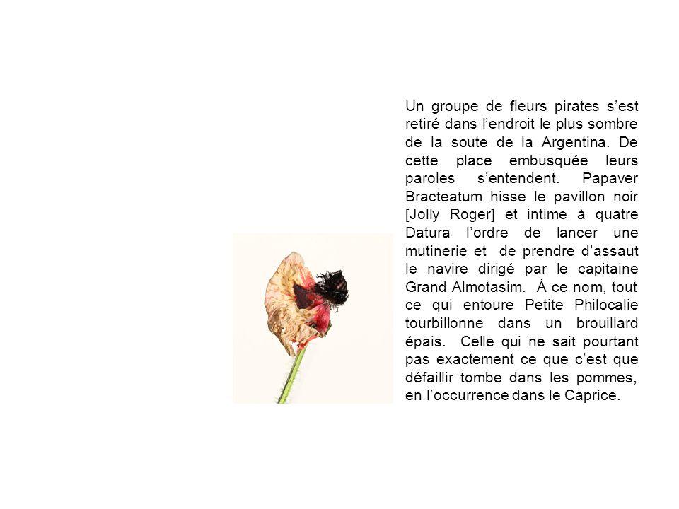 Un groupe de fleurs pirates sest retiré dans lendroit le plus sombre de la soute de la Argentina. De cette place embusquée leurs paroles sentendent. P
