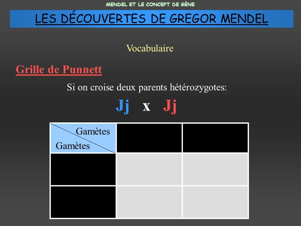 Grille de Punnett Si on croise deux parents hétérozygotes: Jj x Jj MENDEL ET LE CONCEPT DE GÈNE Vocabulaire Gamètes LES DÉCOUVERTES DE GREGOR MENDEL