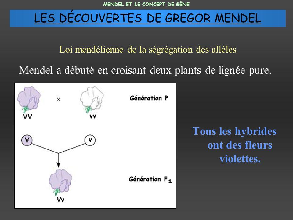 Mendel a débuté en croisant deux plants de lignée pure. Tous les hybrides ont des fleurs violettes. MENDEL ET LE CONCEPT DE GÈNE Loi mendélienne de la
