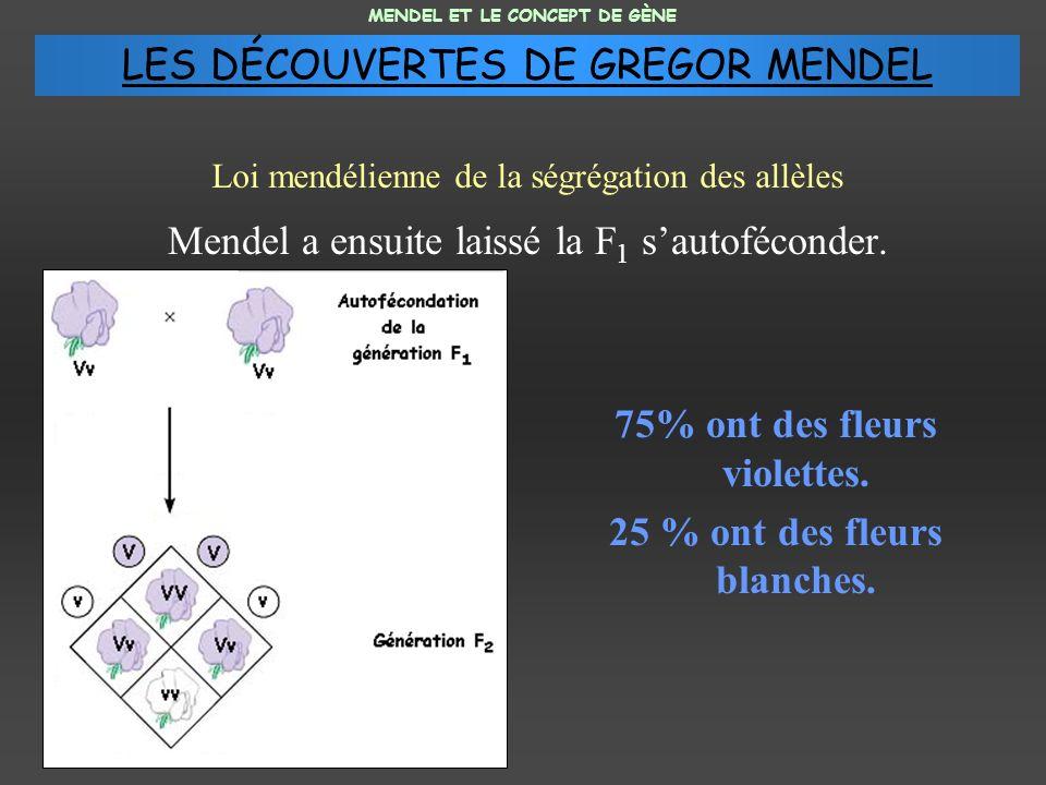 Mendel a ensuite laissé la F 1 sautoféconder. 75% ont des fleurs violettes. 25 % ont des fleurs blanches. MENDEL ET LE CONCEPT DE GÈNE Loi mendélienne