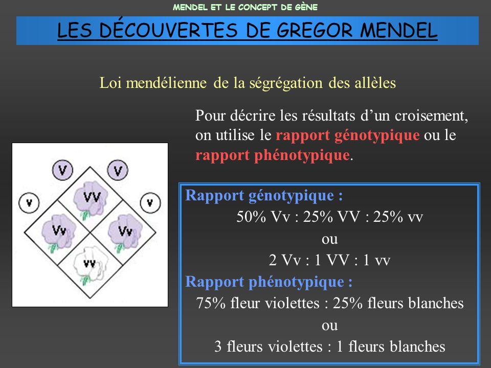 Pour décrire les résultats dun croisement, on utilise le rapport génotypique ou le rapport phénotypique. Rapport génotypique : 50% Vv : 25% VV : 25% v