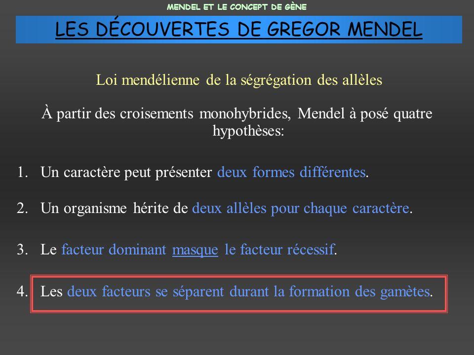 À partir des croisements monohybrides, Mendel à posé quatre hypothèses: 1.Un caractère peut présenter deux formes différentes. 2.Un organisme hérite d