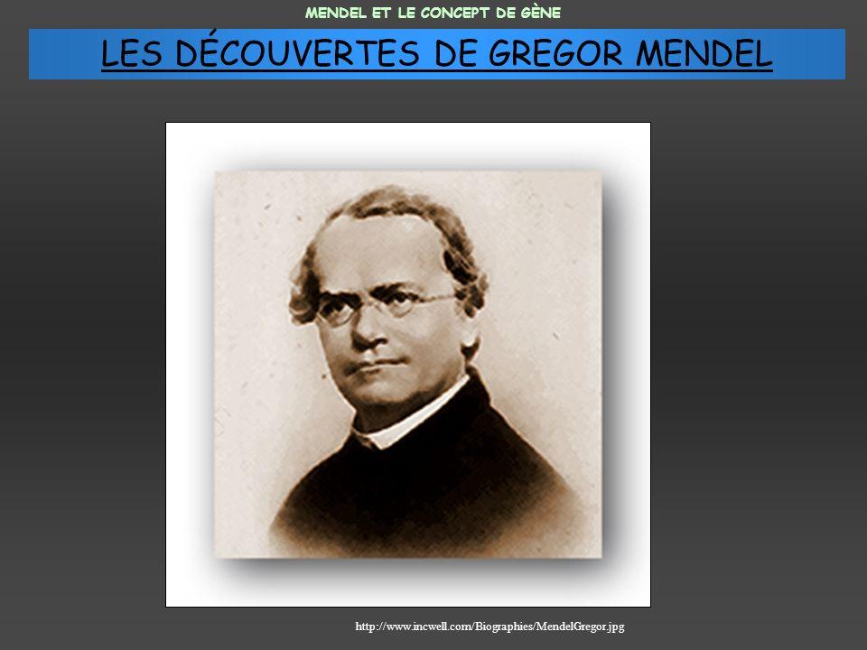 MENDEL ET LE CONCEPT DE GÈNE http://www.incwell.com/Biographies/MendelGregor.jpg LES DÉCOUVERTES DE GREGOR MENDEL