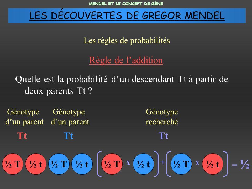 Règle de laddition Quelle est la probabilité dun descendant Tt à partir de deux parents Tt ? MENDEL ET LE CONCEPT DE GÈNE Les règles de probabilités G