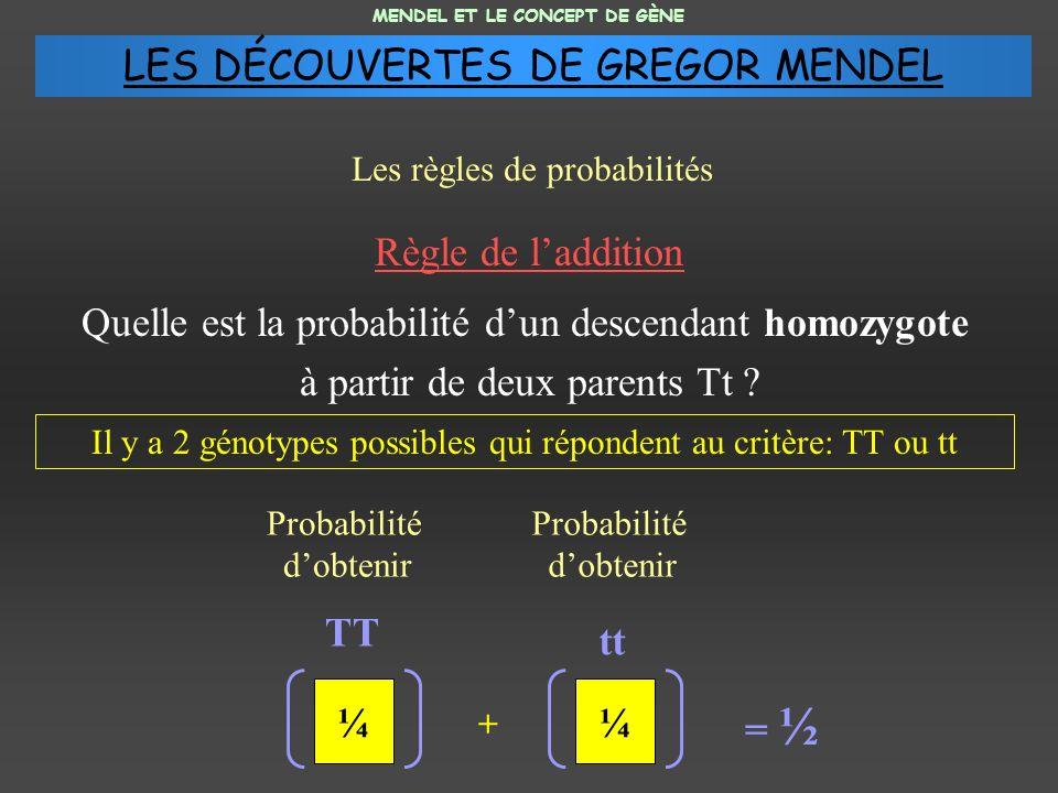 Règle de laddition Quelle est la probabilité dun descendant homozygote à partir de deux parents Tt ? MENDEL ET LE CONCEPT DE GÈNE Les règles de probab