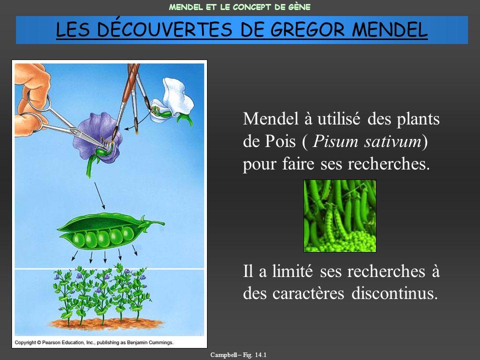 Mendel à utilisé des plants de Pois ( Pisum sativum) pour faire ses recherches. Il a limité ses recherches à des caractères discontinus. MENDEL ET LE