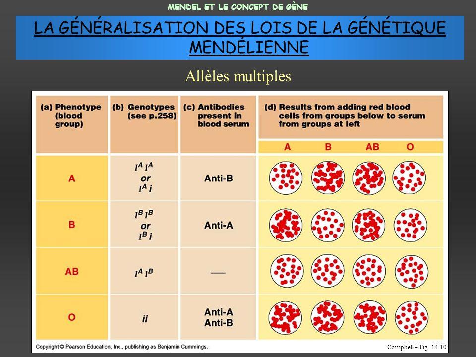 MENDEL ET LE CONCEPT DE GÈNE Allèles multiples Campbell – Fig.