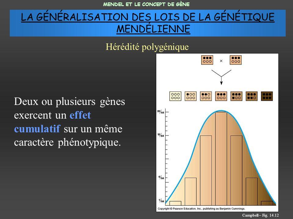 Deux ou plusieurs gènes exercent un effet cumulatif sur un même caractère phénotypique. MENDEL ET LE CONCEPT DE GÈNE Hérédité polygénique Campbell – F