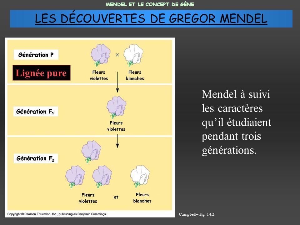 Mendel à suivi les caractères quil étudiaient pendant trois générations. MENDEL ET LE CONCEPT DE GÈNE Campbell – Fig. 14.2 Lignée pure LES DÉCOUVERTES