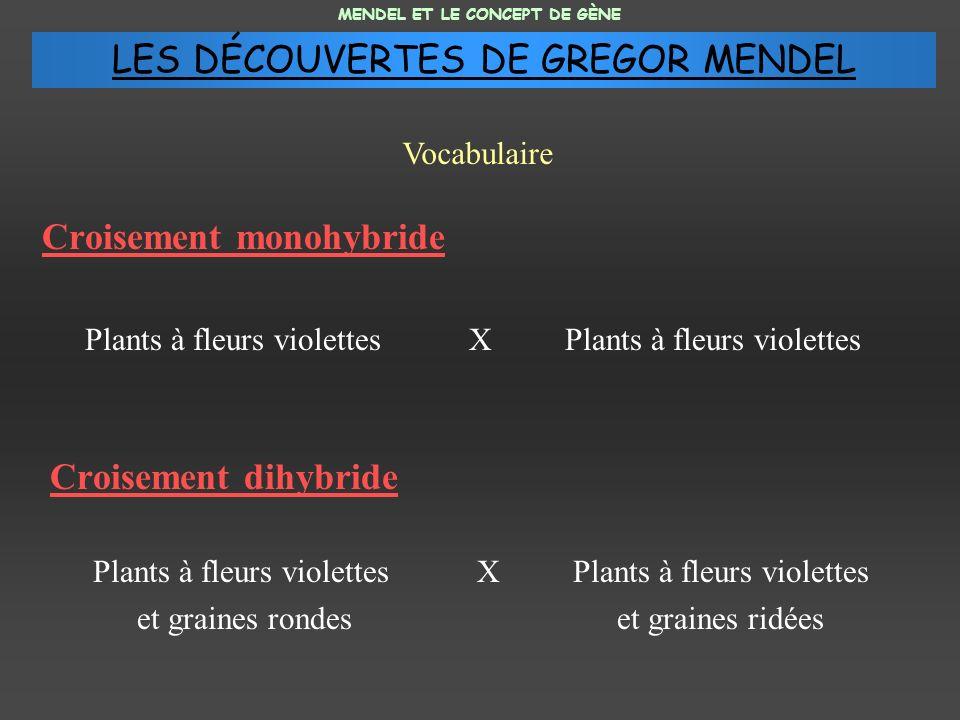 Croisement monohybride Plants à fleurs violettesX Plants à fleurs violettes Croisement dihybride Plants à fleurs violettesXPlants à fleurs violettes e