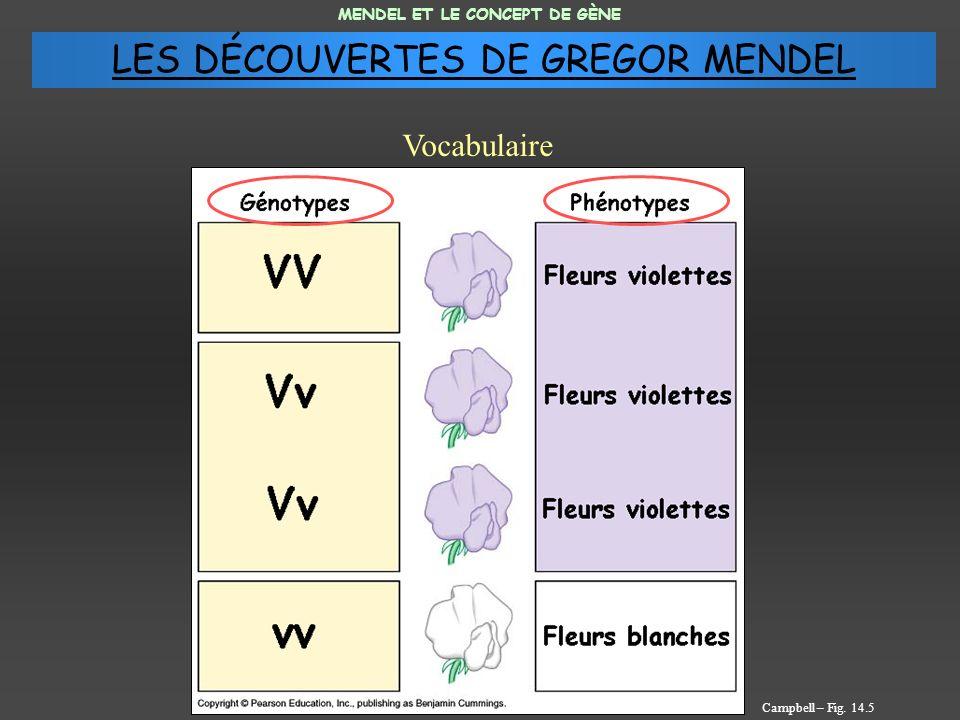 MENDEL ET LE CONCEPT DE GÈNE Vocabulaire Campbell – Fig. 14.5 LES DÉCOUVERTES DE GREGOR MENDEL