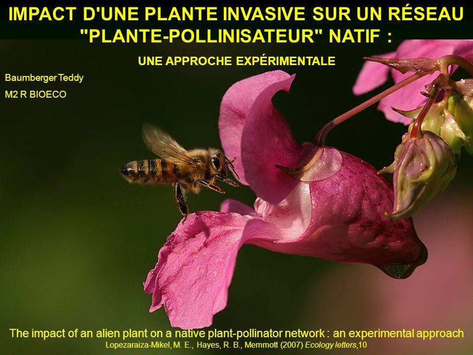 IMPACT D'UNE PLANTE INVASIVE SUR UN RÉSEAU