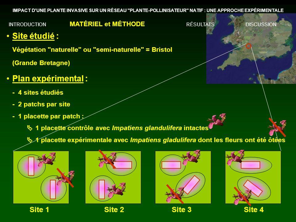 Site 1Site 2Site 3Site 4 Site étudié : Végétation naturelle ou semi-naturelle = Bristol (Grande Bretagne) Plan expérimental : -4 sites étudiés -2 patchs par site -1 placette par patch : 1 placette contrôle avec Impatiens glandulifera intactes 1 placette expérimentale avec Impatiens gladulifera dont les fleurs ont été ôtées IMPACT D UNE PLANTE INVASIVE SUR UN RÉSEAU PLANTE-POLLINISATEUR NATIF : UNE APPROCHE EXPÉRIMENTALE INTRODUCTION MATÉRIEL et MÉTHODE RÉSULTATSDISCUSSION