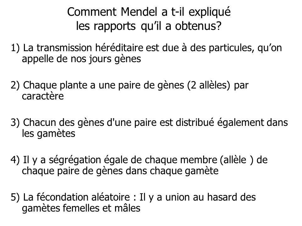 Comment Mendel a t-il expliqué les rapports quil a obtenus.