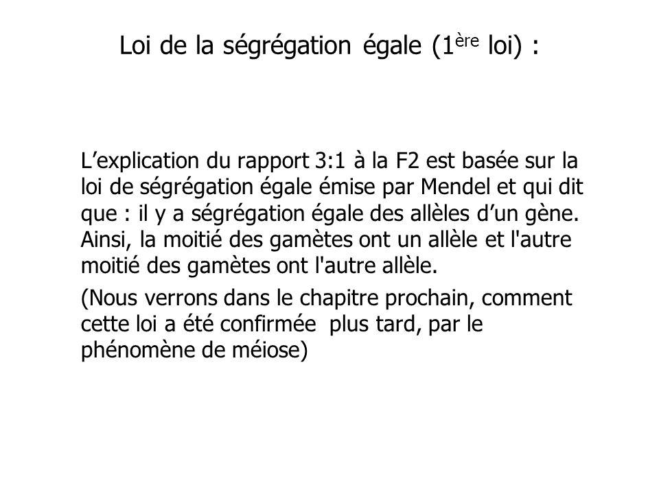Loi de la ségrégation égale (1 ère loi) : Lexplication du rapport 3:1 à la F2 est basée sur la loi de ségrégation égale émise par Mendel et qui dit que : il y a ségrégation égale des allèles dun gène.
