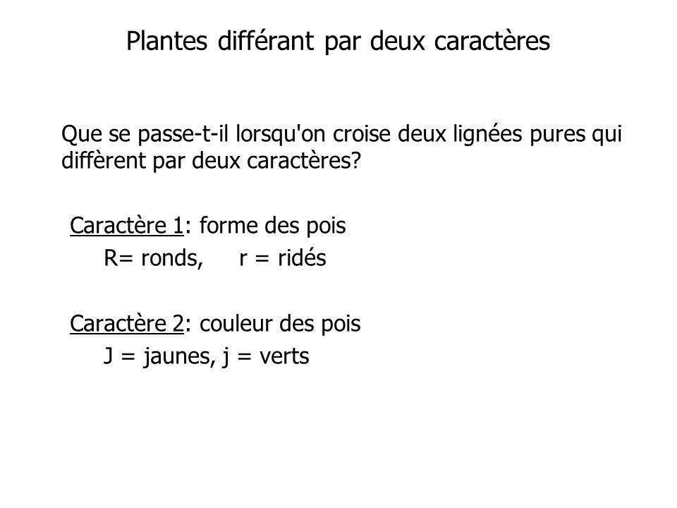 Plantes différant par deux caractères Que se passe-t-il lorsqu on croise deux lignées pures qui diffèrent par deux caractères.