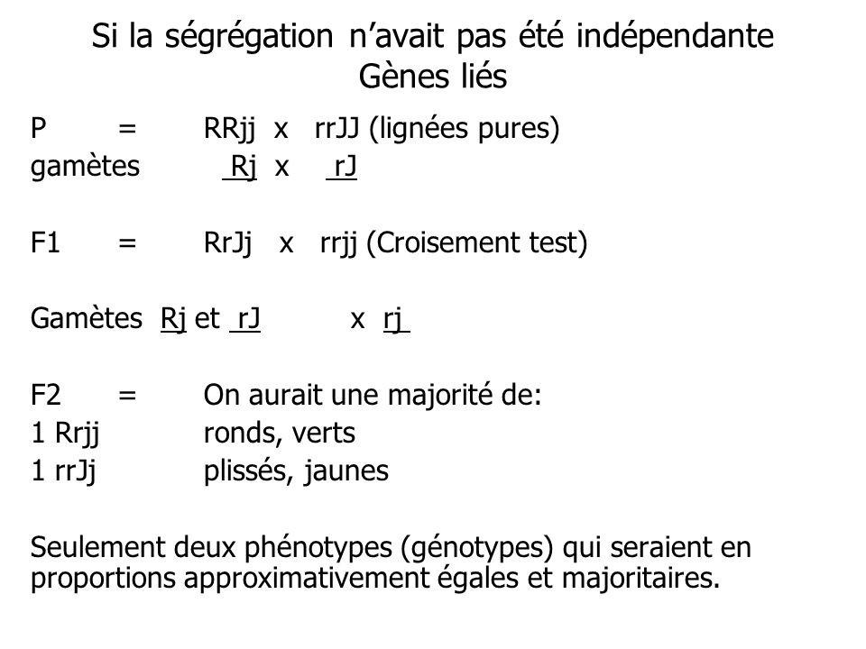 Si la ségrégation navait pas été indépendante Gènes liés P=RRjj x rrJJ (lignées pures) gamètes Rj x rJ F1=RrJj x rrjj (Croisement test) Gamètes Rj et rJ x rj F2=On aurait une majorité de: 1 Rrjjronds, verts 1 rrJjplissés, jaunes Seulement deux phénotypes (génotypes) qui seraient en proportions approximativement égales et majoritaires.