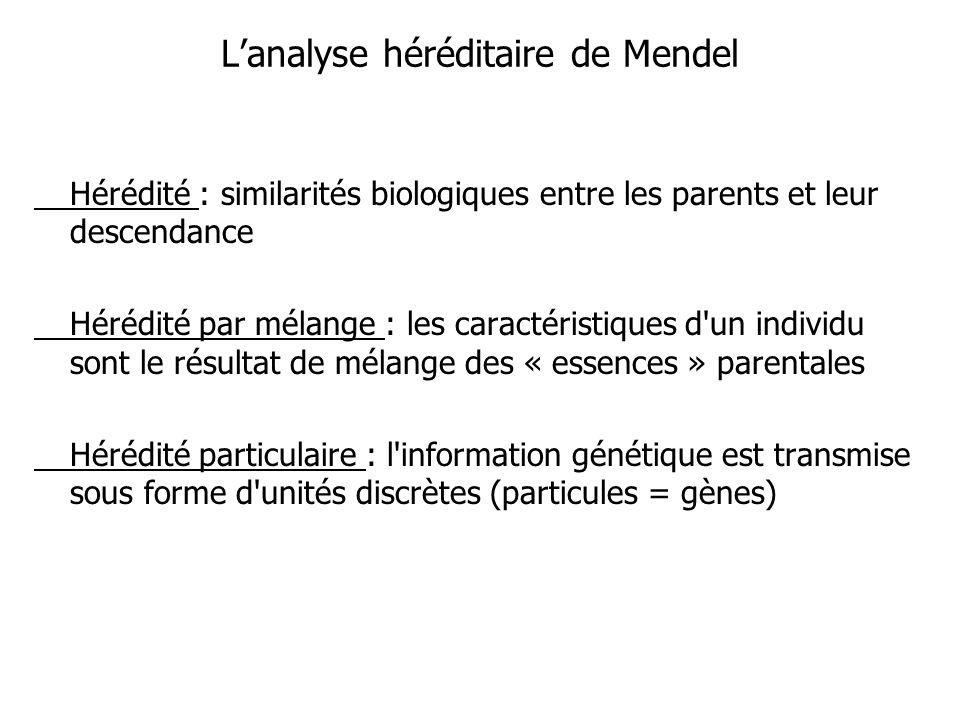 Lanalyse héréditaire de Mendel Hérédité : similarités biologiques entre les parents et leur descendance Hérédité par mélange : les caractéristiques d un individu sont le résultat de mélange des « essences » parentales Hérédité particulaire : l information génétique est transmise sous forme d unités discrètes (particules = gènes)