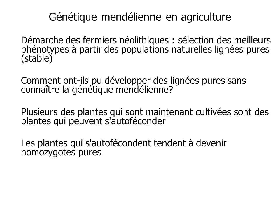 Génétique mendélienne en agriculture Démarche des fermiers néolithiques : sélection des meilleurs phénotypes à partir des populations naturelles lignées pures (stable) Comment ont-ils pu développer des lignées pures sans connaître la génétique mendélienne.
