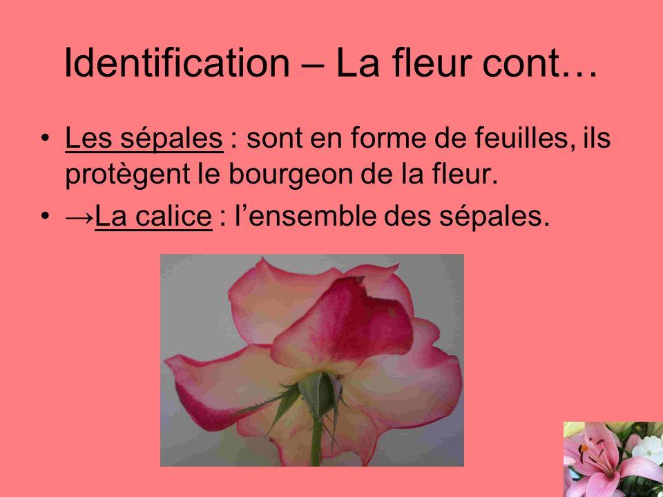Identification – La fleur cont… Les sépales : sont en forme de feuilles, ils protègent le bourgeon de la fleur. La calice : lensemble des sépales.