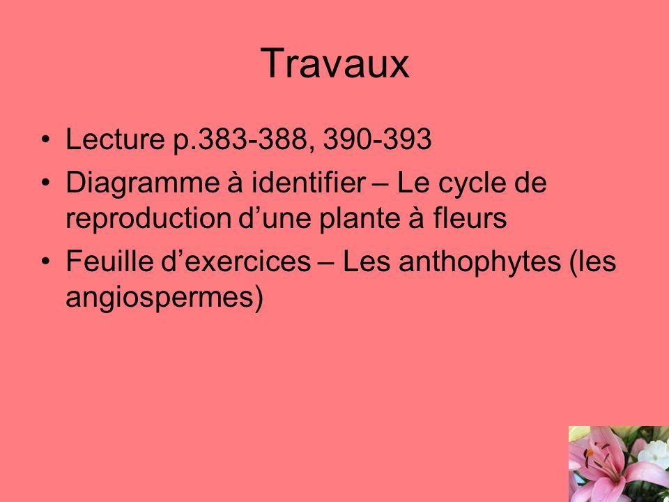 Travaux Lecture p.383-388, 390-393 Diagramme à identifier – Le cycle de reproduction dune plante à fleurs Feuille dexercices – Les anthophytes (les an