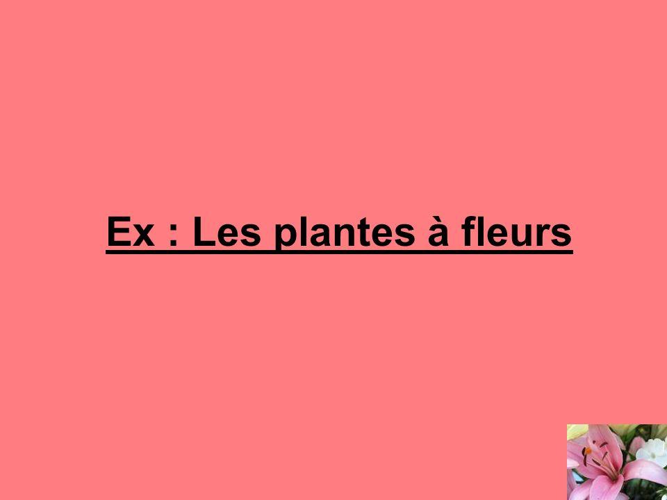 Ex : Les plantes à fleurs