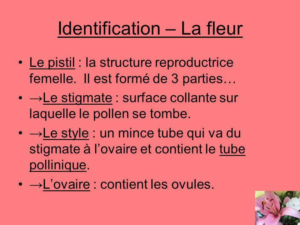 Identification – La fleur Le pistil : la structure reproductrice femelle. Il est formé de 3 parties… Le stigmate : surface collante sur laquelle le po