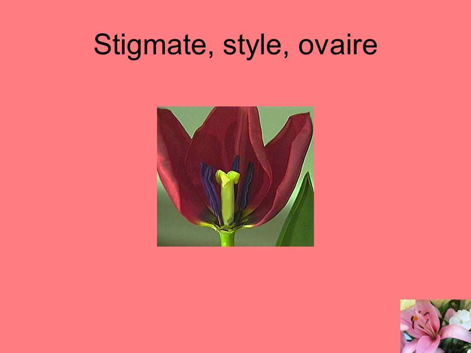 Stigmate, style, ovaire