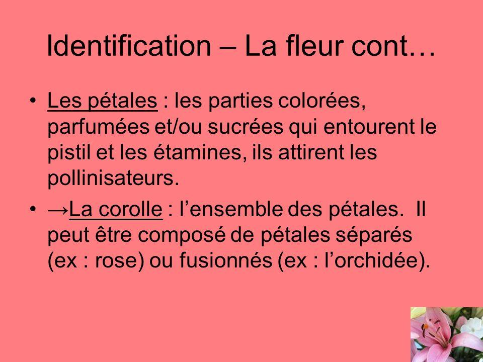 Identification – La fleur cont… Les pétales : les parties colorées, parfumées et/ou sucrées qui entourent le pistil et les étamines, ils attirent les