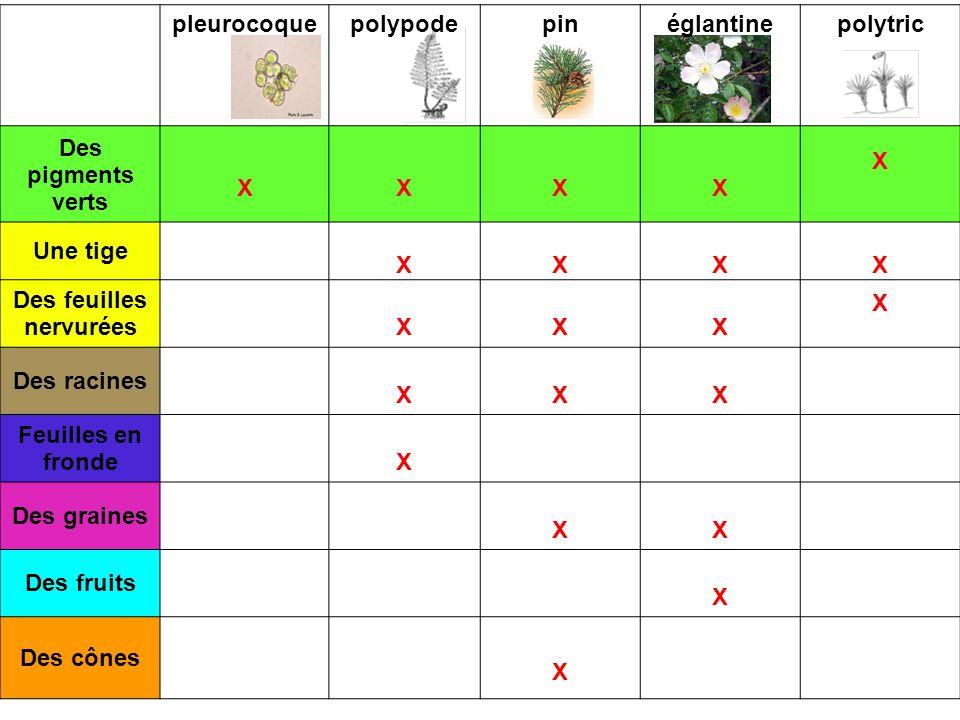 pleurocoquepolypodepinéglantinepolytric Des pigments verts XXXX X Une tige XXXX Des feuilles nervuréesXXX X Des racines XXX Feuilles en frondeX Des gr