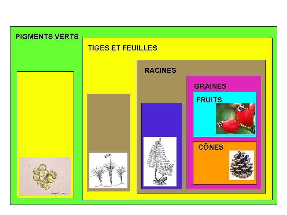 PIGMENTS VERTS TIGES ET FEUILLES RACINES GRAINES FRUITS CÔNES